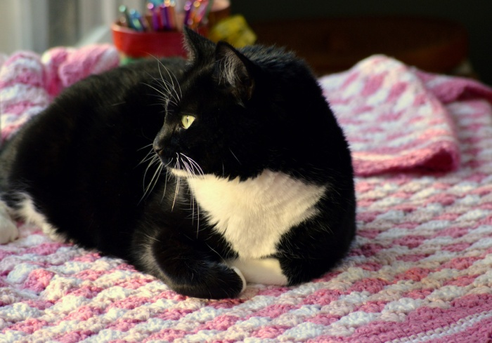 Kitty on crocheted blanket, Shells of Love pattern by Darleen Hopkins