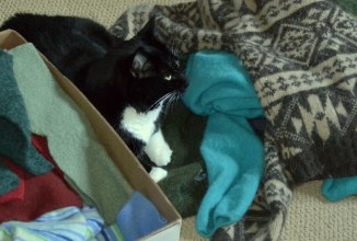 Felted sweaters ready to cut up and turn into a crocheted kitchen throw rug.  And my cat. :)